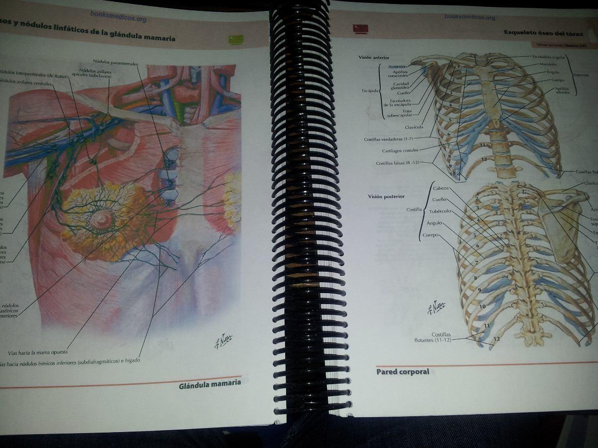Vendo Atlas de anatomía Netter 5° edicion, impreso a color a $15.000 ...